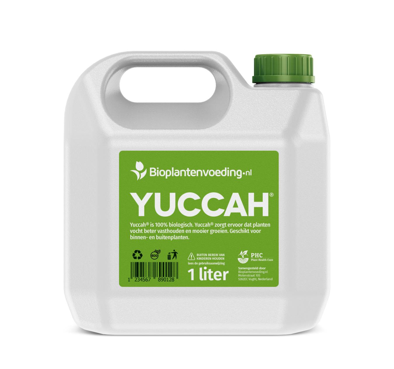 Koop Yuccah